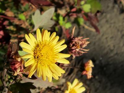 道端に咲くお花