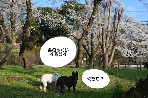 DSC_2060.jpg