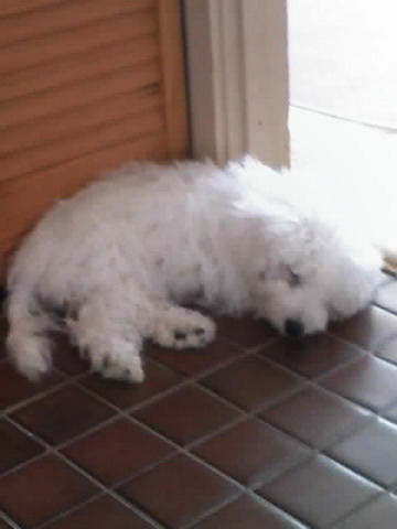 Puppy06