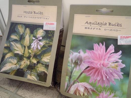 my-garden 085 (2)
