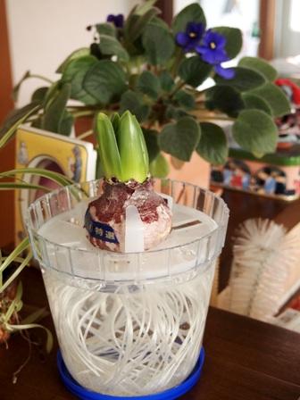 my-garden 137