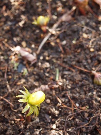 my-garden 055 (3)