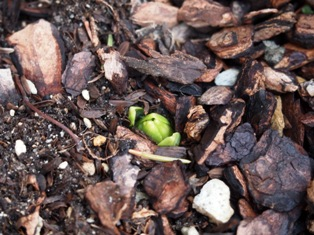 my-garden 021 (2)