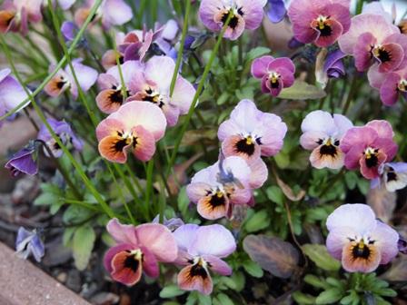 my-garden 014 (4)