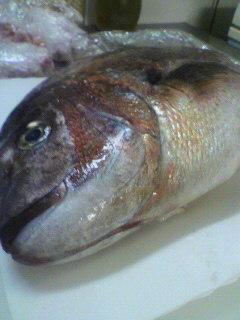 愛知県産桜鯛