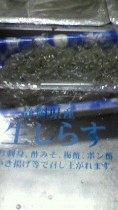 静岡県産生しらす