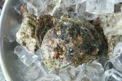 大分県産天然岩牡蠣