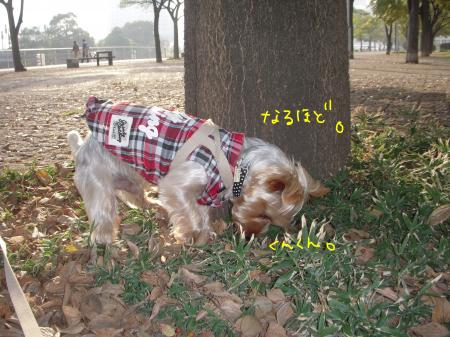 DSCN1671_convert_20111202091506.jpg