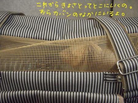 DSCN1916_convert_20120111100911.jpg