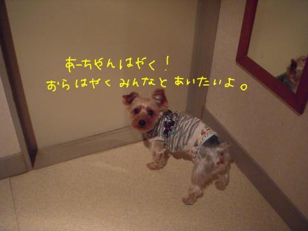 DSCN1918_convert_20120111100955.jpg