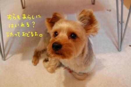 DSC_0013_convert_20111221234809.jpg