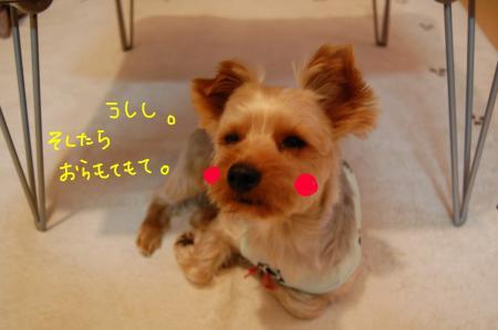 DSC_0014_convert_20111221234833.jpg