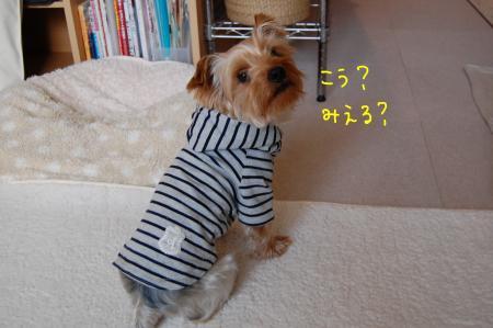 DSC_0020_convert_20120209235932.jpg
