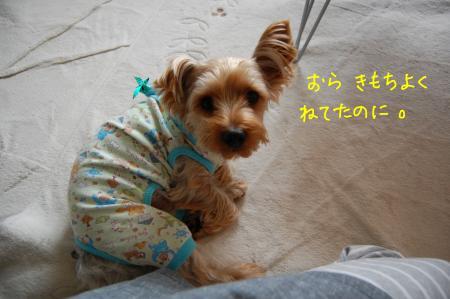 DSC_0030_convert_20111208225628.jpg