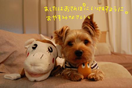 DSC_0041_convert_20111206224438.jpg