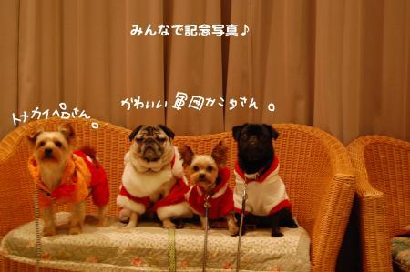 DSC_0055_convert_20120111101608.jpg