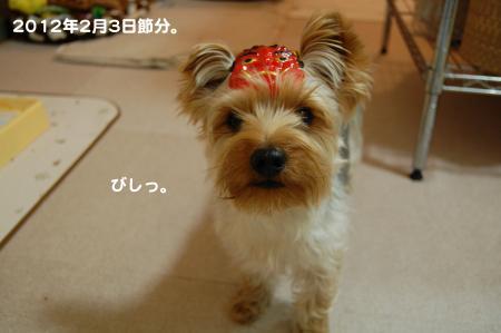 DSC_0065_convert_20120205113736.jpg