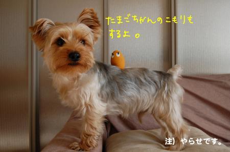 DSC_0067_convert_20120207222831.jpg