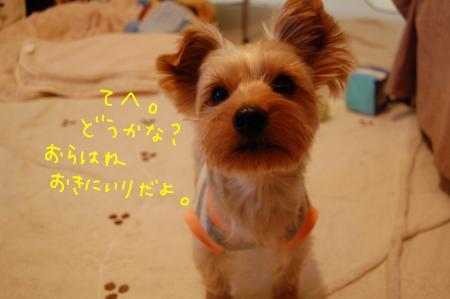 DSC_0220_convert_20120107004526.jpg