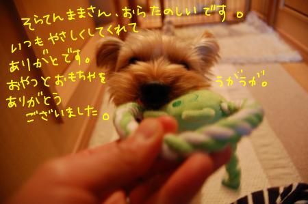 DSC_0313_convert_20120107004603.jpg