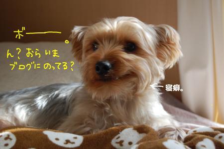 DSC_0379_convert_20120201115535.jpg