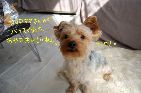 DSC_0428_convert_20120202233239.jpg