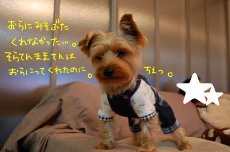 DSC_0465_convert_20120202233406.jpg