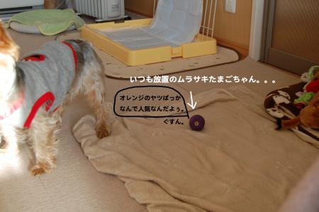 DSC_0525_convert_20120207222738.jpg