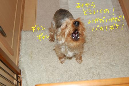 pero+_convert_20120206200739.jpg