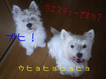 20100614-3.jpg