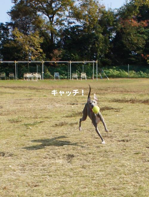 11-30_20111130222657.jpg