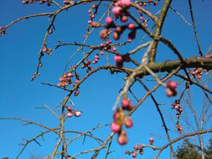 暖かい春はもうすぐかな