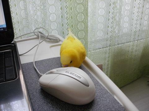 マウスちゃんあそぼ1