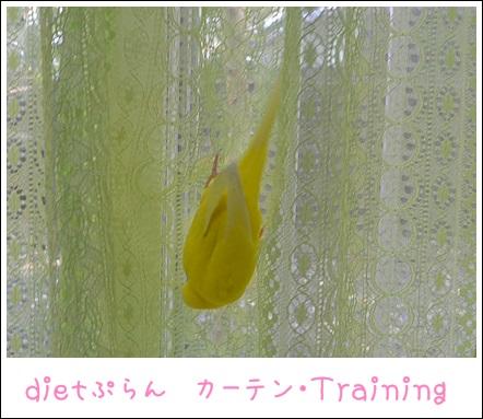 ぽぴ秘伝カーテン渡り1dietぷらん1