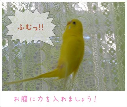 ぽぴ秘伝カーテン渡り2ふっきん2