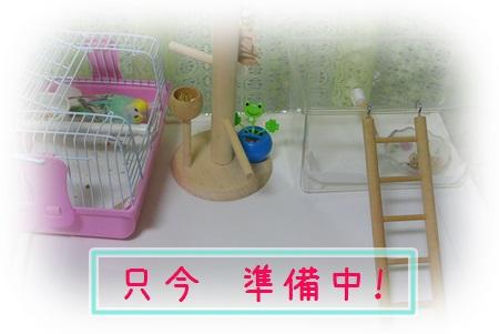 きゃりーぴんく準備中1-1