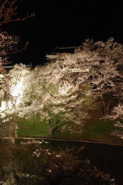 上田城 夜桜