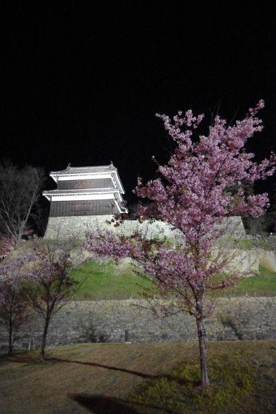上田城 夜桜4