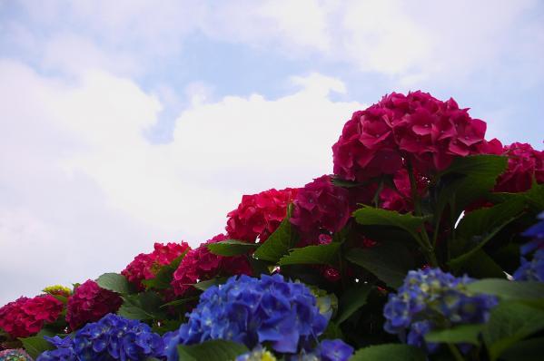 DSC_0129_convert_20110609175757.jpg