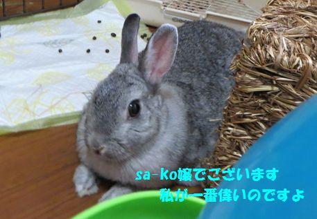 sa-ko 20141002