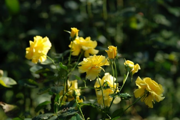 ak.赤塚植物園 20141019 001