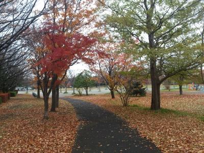 公園の北側の道