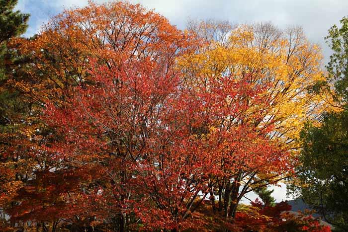 奈良公園 紅葉1