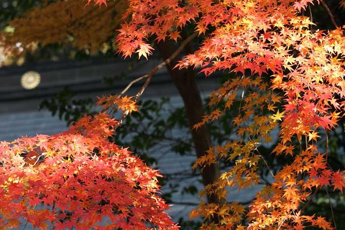 奈良公園 紅葉2