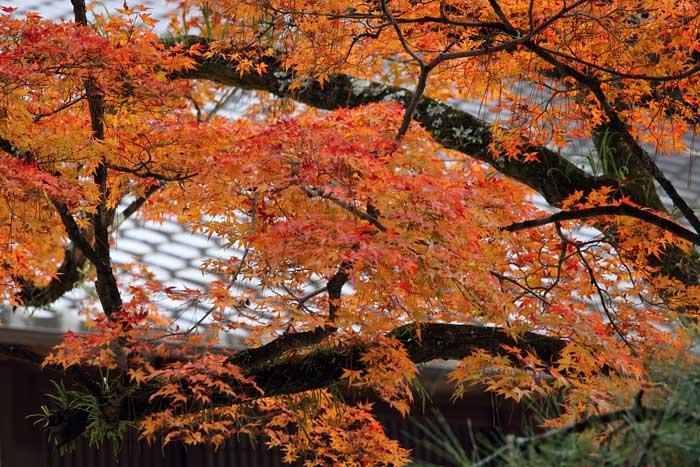 奈良公園 紅葉3