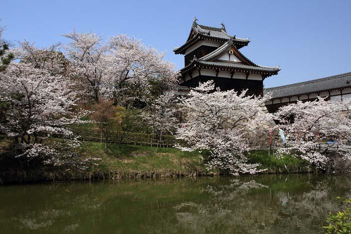 郡山城跡 桜2