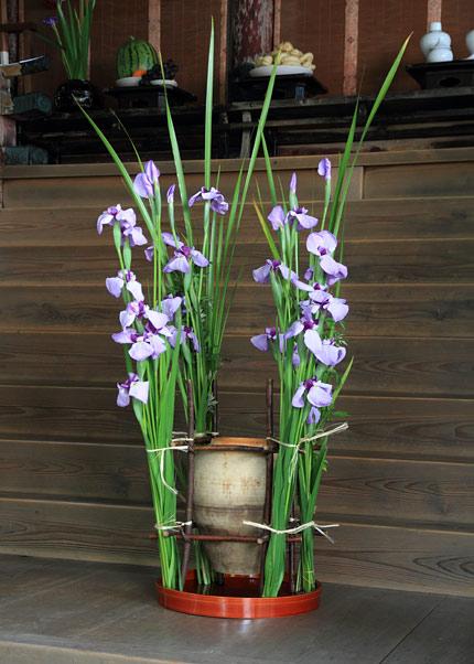 漢国神社 菖蒲祭3