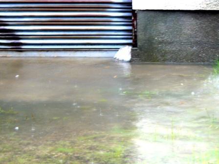 車庫(今は倉庫)に浸水