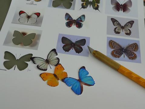 蝶の標本箱2