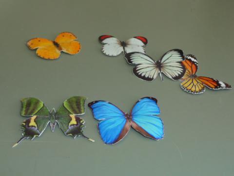 蝶の標本箱3